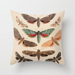 Vintage Natural History Moths Throw Pillow