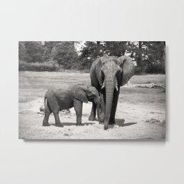 Elephant Mom & Baby Metal Print