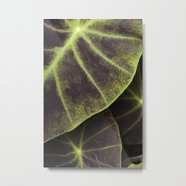 Leaf Line Art Elephant Ear Study Metal Print