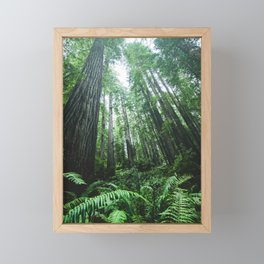 Redwood National Park- Pacific Northwest Nature Photography Framed Mini Art Print