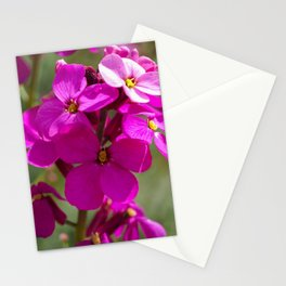 Pink Phlox Flowers Stationery Cards