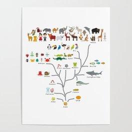 Evolution scale from unicellular organism to mammals. Evolution in biology, scheme evolution Poster
