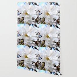 Magnolia 2 Wallpaper