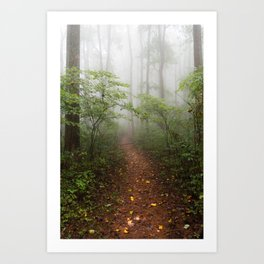 Adventure Ahead - Foggy Forest Digital Nature Photography Art Print