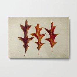 three oak leaves Metal Print