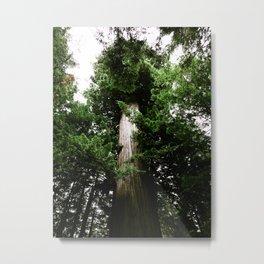 Redwoods #3 Metal Print