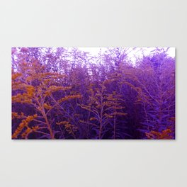 Blue and Yellow Goldenrod Canvas Print