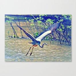 Flying (Blue Heron) Canvas Print