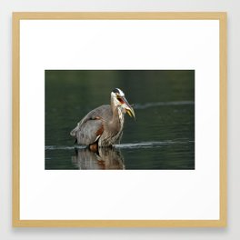 Great Blue Heron | Wildlife Photography | Birds | Nature | Fish Framed Art Print