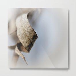 Curled Elegance... (square) Metal Print