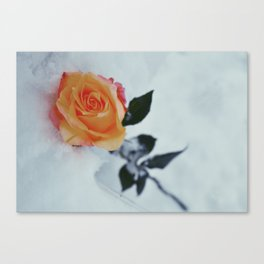 Rose in Snow Canvas Print