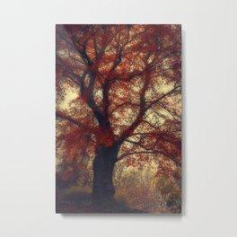 Copper Beech Metal Print