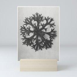 Saxifraga Willkommniana (Willkomm's Saxifrage) leaf enlarged 6 times from Urformen der Kunst (1928) Mini Art Print