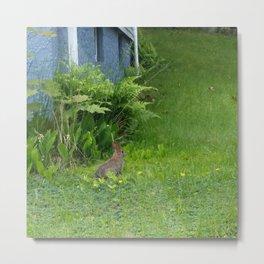 Guest in the Yard Metal Print