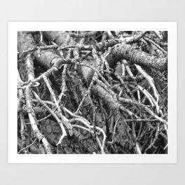 Pine Tree Close-up - M Art Print