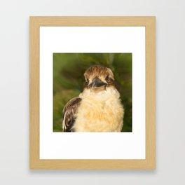 Painted laughing kookaburra Framed Art Print