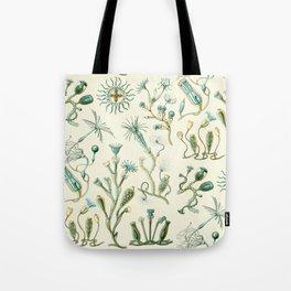 Ernst Haeckel - Scientific Illustration - Campanariae Tote Bag