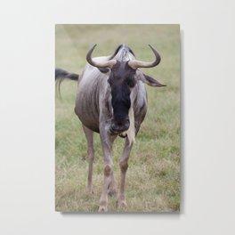 Wild Wildebeest Metal Print