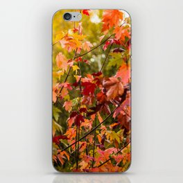 Colours of Fall iPhone Skin