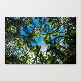 Falling Coco's Canvas Print
