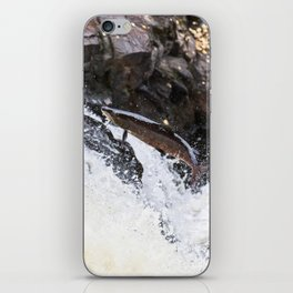 Leaping Atlantic salmon salmo salar iPhone Skin