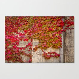 Red Ivy Canvas Print