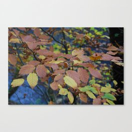 Autumnal Leaves Canvas Print