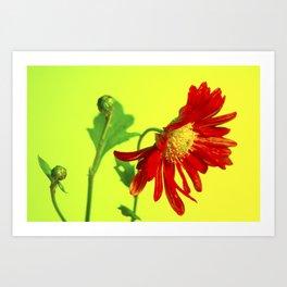 buds&bloom Art Print