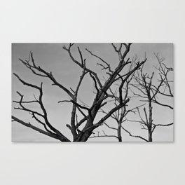 Clawed Nature Canvas Print