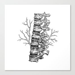 Vertebral column Canvas Print