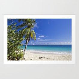 Caribbean Beach With Palm Art Print