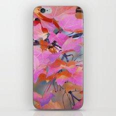 Autumn Rainbow Colors iPhone & iPod Skin