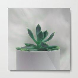 sweet cactus Metal Print