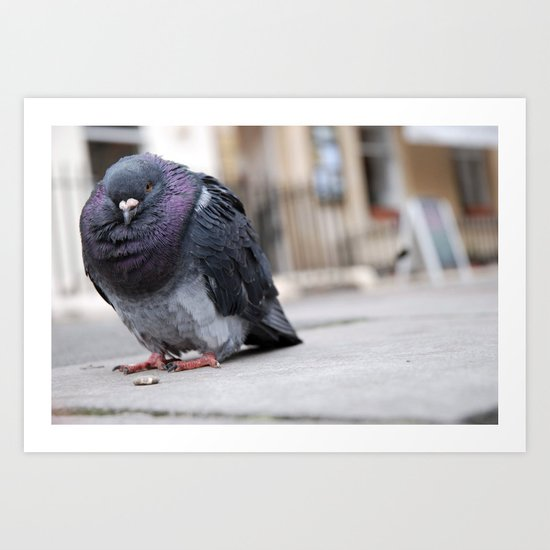 Mr Pigeon Art Print