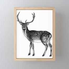 Fallow deer stag - ink illustration Framed Mini Art Print