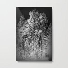 Black and White Ash Trees Metal Print