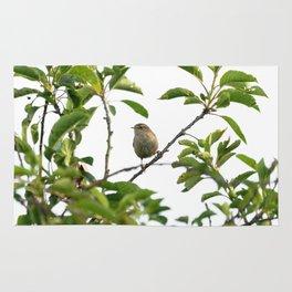 Wren Songbird Bird on a Branch (Troglodytes) Rug