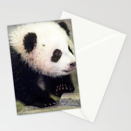 Extremely Cute Little Baby Panda First Steps Ultra HD Stationery Cards