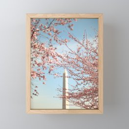 Washington DC Cherry Blossoms Framed Mini Art Print