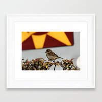 sparrow Framed Art Prints featuring Sparrow by IowaShots