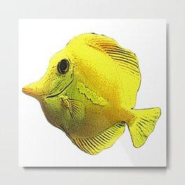 yellow surgeon fish, water Metal Print