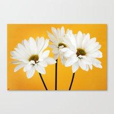 Triple Daisy Canvas Print