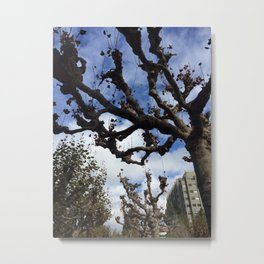 Plane trees on the Berkeley campus Metal Print