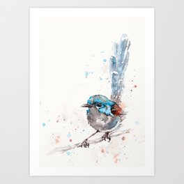 Mischief In The Making (Variegated Fairy Wren) Art Print