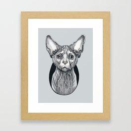Sphynx cat Framed Art Print