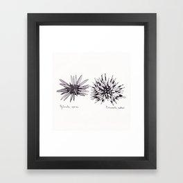 Tropical Sea Urchin Pen & Ink Framed Art Print