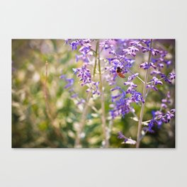 sage & bee.  Canvas Print