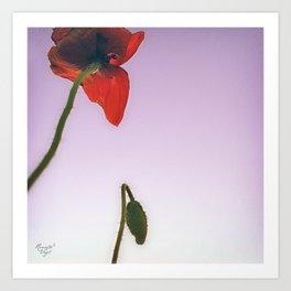 poppy no.3 Art Print