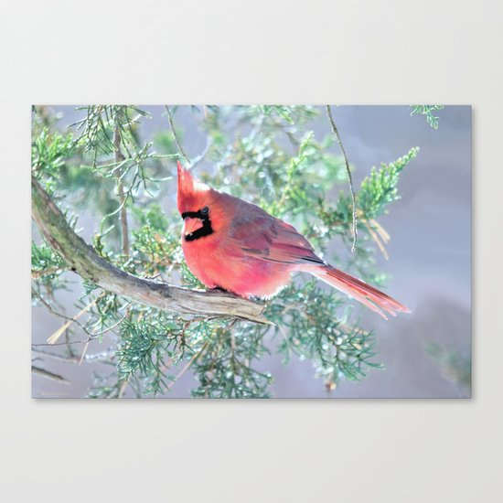 Cold Winter's Day Cardinal Canvas Print