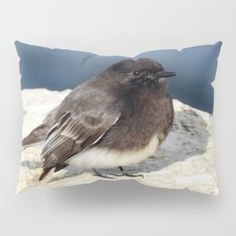 Black Phoebe Pillow Sham
